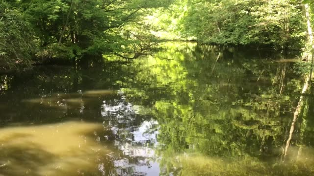 looking at nature with a river and trees in british springtime, panning shot from left to right - beauty in nature stock videos & royalty-free footage