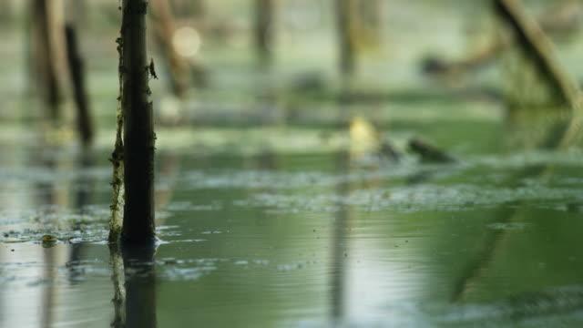 vídeos de stock e filmes b-roll de looking beyond the pond - natureza morta
