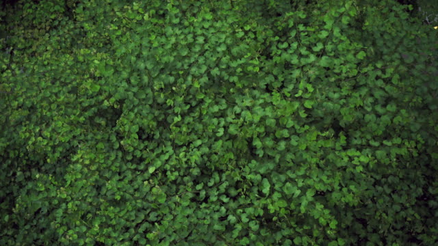 looking down at green leaves in the woods. - leaf stock videos & royalty-free footage