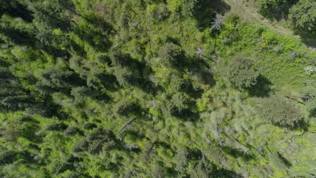 looking down, directly above aerial view of the forest in the rattlesnake wilderness area, missoula county, montana, in the sunny spring day. drone video with the panning cinematic camera motion. - montana western usa stock videos & royalty-free footage