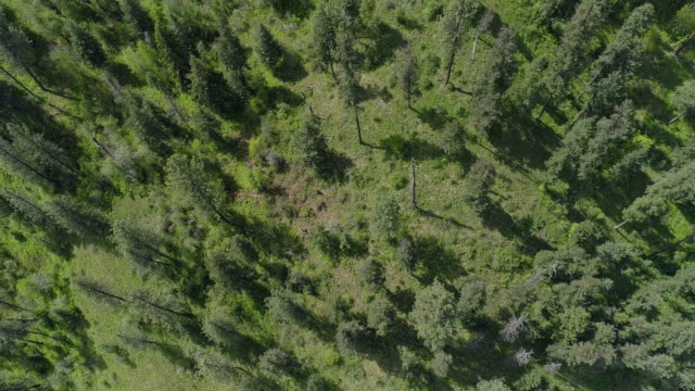 looking down, directly above aerial view of the forest in the rattlesnake wilderness area, missoula county, montana, in the sunny spring day. drone video with the backward and tilting-up cinematic camera motion. - montana western usa stock videos & royalty-free footage