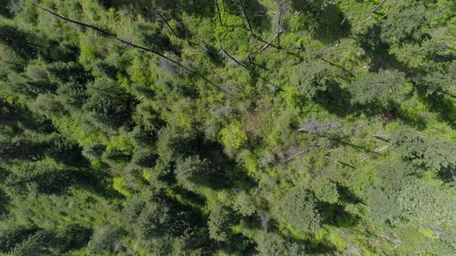 looking down, directly above aerial view of the mountain in the rattlesnake wilderness area, missoula county, montana, in the sunny spring day. drone video with the panoramic cinematic camera motion. - montana western usa stock videos & royalty-free footage