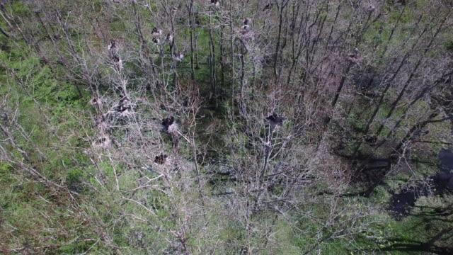 looking down on birds nesting - drone aerial 4k everglades, swamp bayou with wildlife alligator nesting ibis, anhinga, cormorant, snowy egret, spoonbill, blue heron, eagle, hawk, cypress tree 4k nature/wildlife/weather drone aerial video - bayou lafourche stock-videos und b-roll-filmmaterial