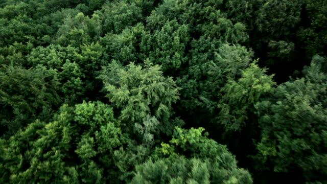 Olhar para Baixo em floresta