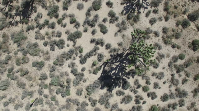 looking down on joshua tree forest - drone aerial video 4k joshua tree national forest, desert barren land, no people with remote location cactus california desert, mojave desert, with extreme terrain 4k nature/wildlife/weather - joshua tree stock videos and b-roll footage