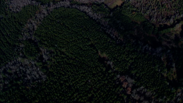 looking down on landscape of woods - aerial view - south carolina,  chester county,  united states - carolina del sud video stock e b–roll