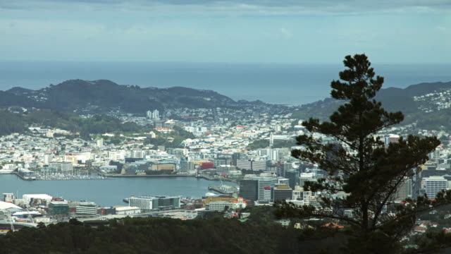 30 Top Wellington Harbour Video Clips and Footage - Getty Images