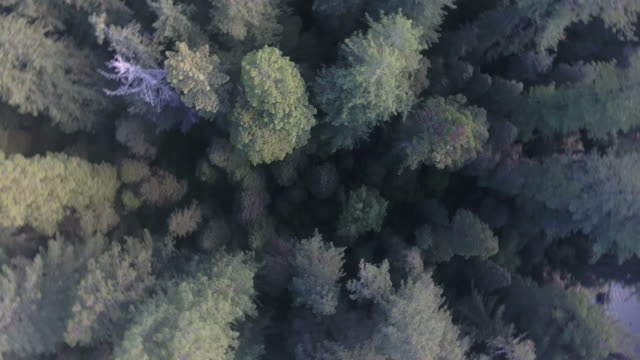 vídeos y material grabado en eventos de stock de looking down pan around aspen trees, aerial, 4k, 14s, 23of34, aspen trees, foliage, mountains, beautiful colors, changing leaves, colorado, aerial, stock video sale - drone discoveries 4k nature/wildlife/weather drone aerial video - secoya