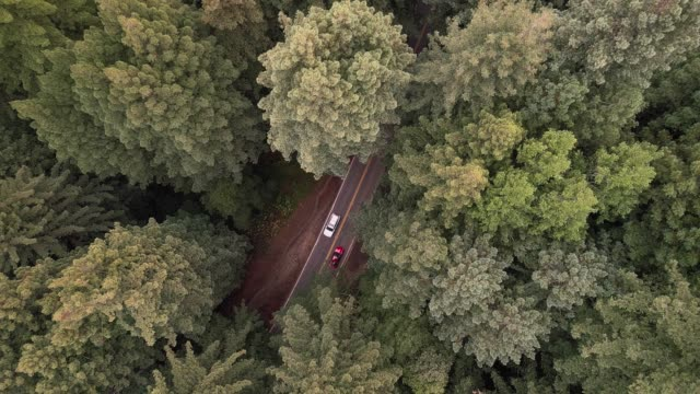 vídeos y material grabado en eventos de stock de mirando hacia abajo a los coches que conducen en la carretera en el bosque de sequoias en el norte de california, ee.uu. costa oeste - bosque de secuoyas