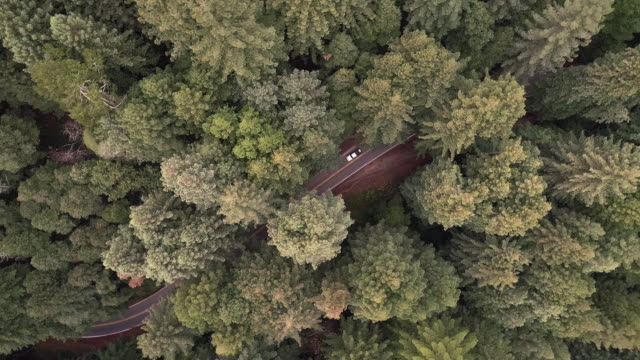 looking down to cars driving on the road in the forest of sequoias in northern california, usa west coast - northern california stock videos & royalty-free footage