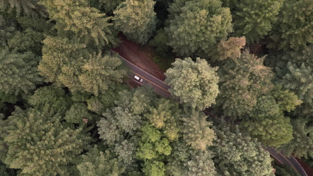 looking down to cars driving on the road in the forest of sequoias in northern california, usa west coast - tall high stock videos & royalty-free footage