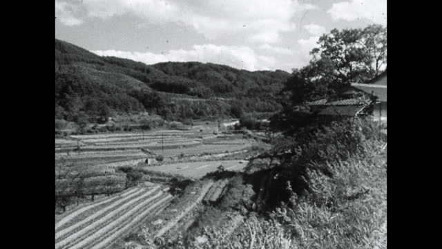 gv/has looking out over paddy paddies in rural japan; 1964 - kyoto prefecture stock videos & royalty-free footage