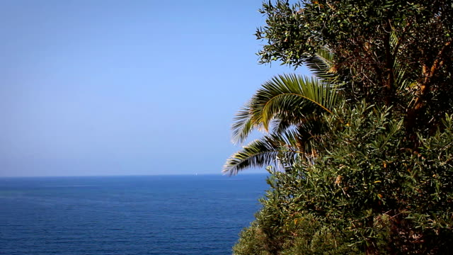 looking out to sea from the palm trees above - aydın province stock videos and b-roll footage
