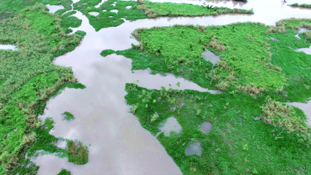 looking straight down above swamp wetlands old river and lost lake delta area - costa caratteristica costiera video stock e b–roll