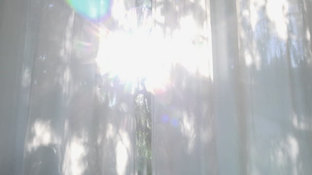 looking through a curtain on a cypress tree - sonnenlicht stock-videos und b-roll-filmmaterial