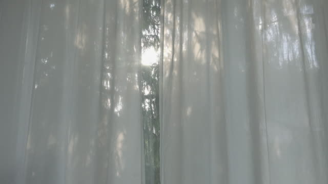 looking through a curtain on a cypress tree - curtain stock videos & royalty-free footage