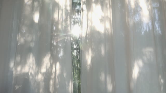 looking through a curtain on a cypress tree - 照明技術点の映像素材/bロール