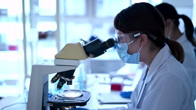 vídeos de stock e filmes b-roll de looking through a microscope. female researchers working in a research facility. - procedimento médico