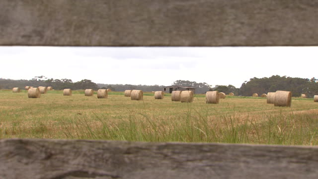 looking through a wooden farm fence towards harvested rolled up hay bales in a paddock old farm shed in the background - hay background stock videos & royalty-free footage