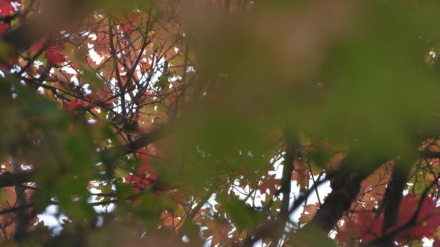 looking through leaves in fall moving on a slider - プロボ点の映像素材/bロール