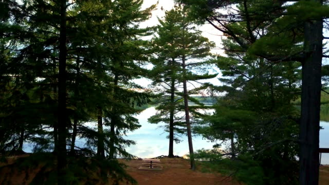Looking through Trees with Calm Upper Peninsula Michigan Lake