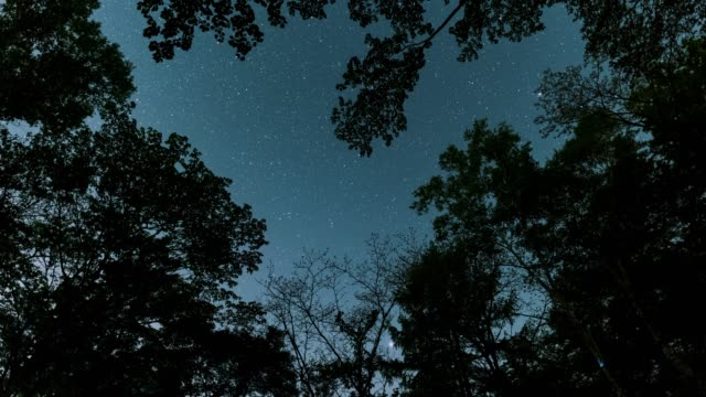 vídeos de stock e filmes b-roll de looking up a night sky in a forest - inclinação para cima