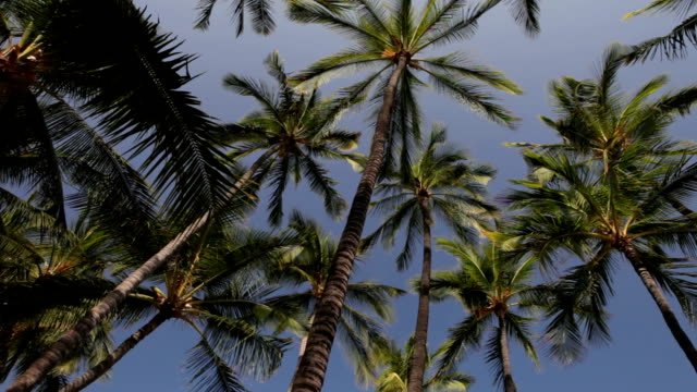 looking up at a palm tree grove against sky - grove stock videos & royalty-free footage