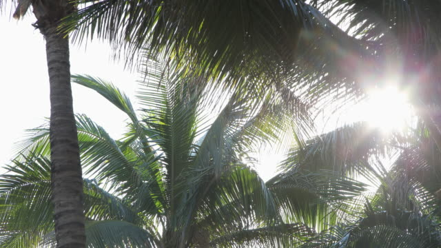 Looking up at hazy sunlight shining through palm trees