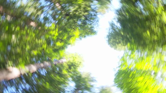 looking up at sky in redwood forest - snabb panorering bildbanksvideor och videomaterial från bakom kulisserna