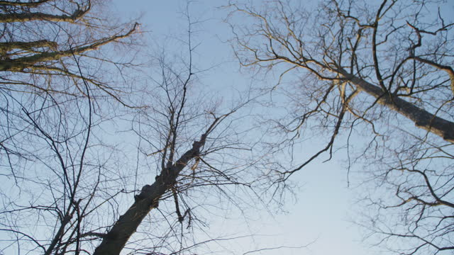 looking up at some branches of dead trees in a sunny winter circlying around - soft focus stock videos & royalty-free footage