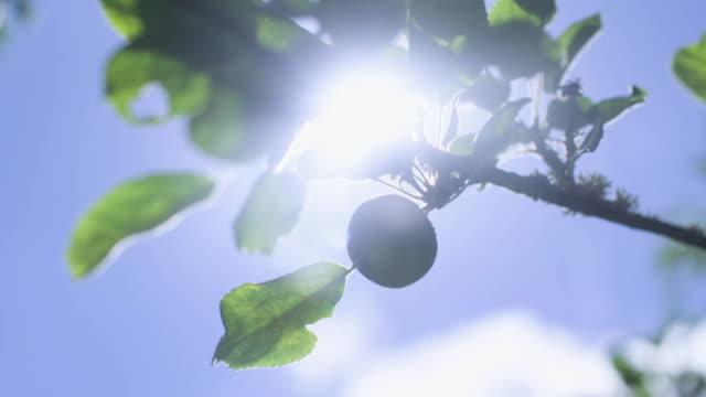looking up at sun on summer's day - blue stock videos & royalty-free footage