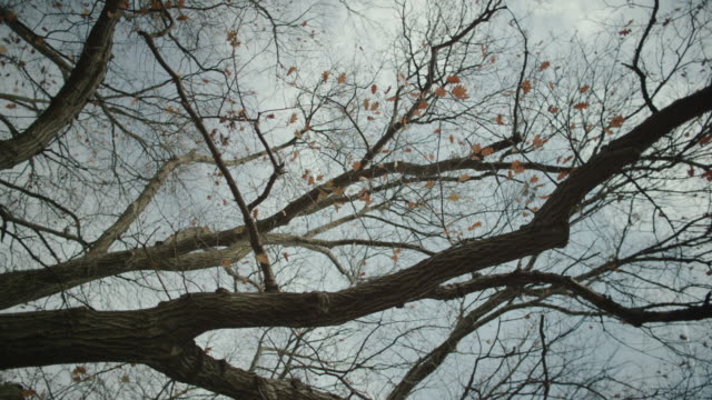 vidéos et rushes de pov looking up at the sky through bare branches and trees. - vertige