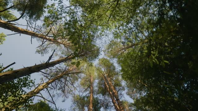 vídeos y material grabado en eventos de stock de mirando hacia el cielo a través de los árboles - cima del árbol