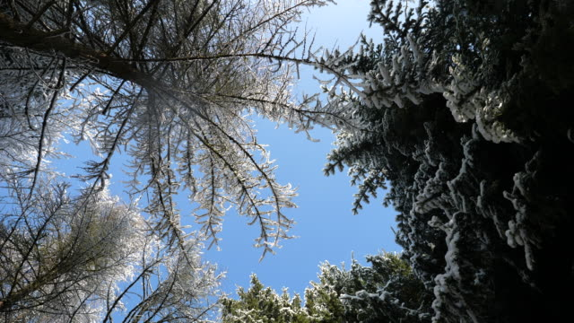 looking up at trees - directly below stock videos & royalty-free footage