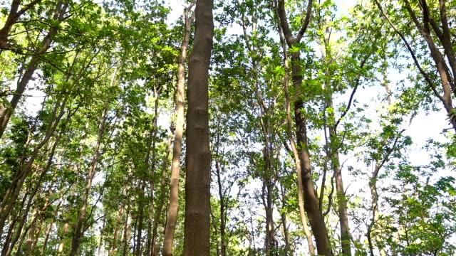 vídeos y material grabado en eventos de stock de buscando bosque - inclinar