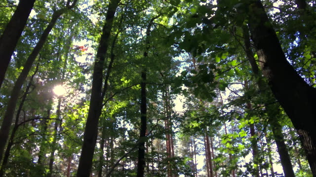 looking up in the autumn forest - spinning point of view stock videos & royalty-free footage