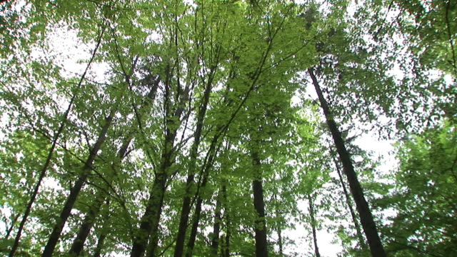 hd: looking up in the forest - spinning point of view stock videos & royalty-free footage
