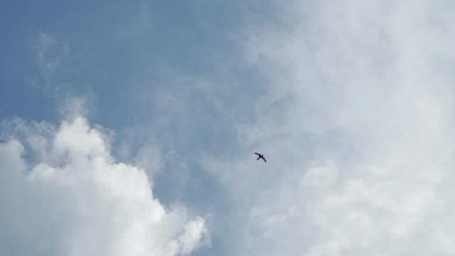 stockvideo's en b-roll-footage met slo mo kijkend naar boven in de lucht en zie een vogel vliegen - 1 minute or greater