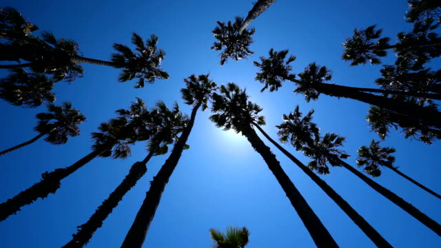 looking up into a forest of tropical beach palm trees - palm leaf stock videos & royalty-free footage