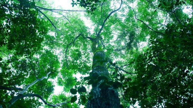 森に降り注ぐ雨を見上げる - moving down点の映像素材/bロール