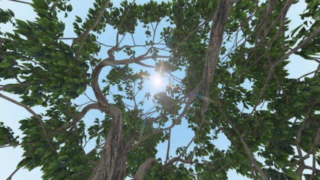 vídeos y material grabado en eventos de stock de mirando hacia arriba los árboles hacia el sol, con movimiento de cámara torcido, canal alfa, fondo de traansparent - rama parte de planta