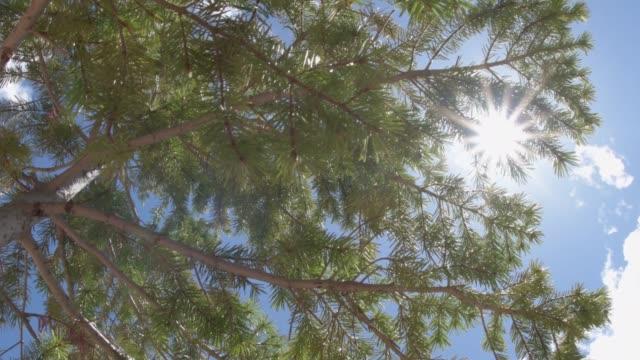 緑の松の針で覆われた枝を見上げて - ブライス峡谷点の映像素材/bロール