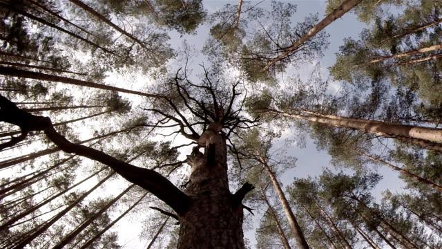 vidéos et rushes de la recherche par le biais de arbres - vertige