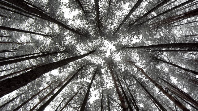 見上げる~木の雪 - 目が回る点の映像素材/bロール