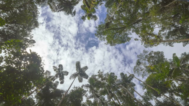 stockvideo's en b-roll-footage met looking up to the sky above a tree fall gap in tropical rainforest. - low angle view
