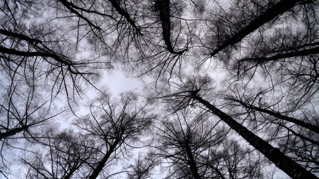 looking up to the sky in snow covered pine trees forest - hokkaido stock videos & royalty-free footage