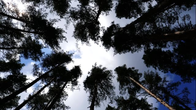 ts. pov. looking up to the sky through the crowns of the trees. vlogging in a forest, mountaineering and hiking in the woodlands, youtube vlogger's personal perspective in an old forest. - pointing stock videos & royalty-free footage