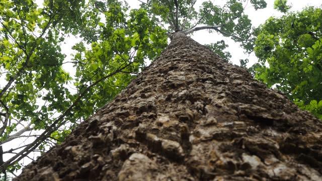 ricerca dell'albero nella foresta - area selvatica video stock e b–roll