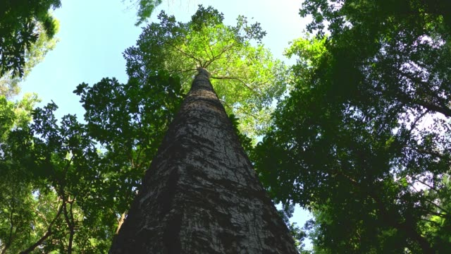 looking up tree in forest with sunlight - tree canopy stock videos & royalty-free footage