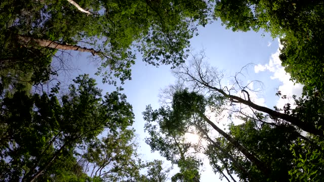 looking up tree in forest with sunlight - tree trunk stock videos & royalty-free footage